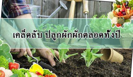 เคล็ดลับ ปลูกผักผักตลอดทั้งปี