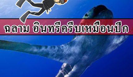 ฉลาม อินทรีครีบเหมือนปีก