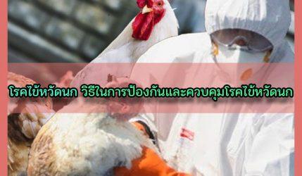 โรคไข้หวัดนก วิธีในการป้องกันและควบคุมโรคไข้หวัดนก